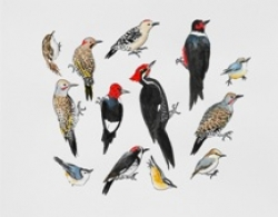Detail from Post-Audubon: Birds of North America by Nancy Mladenoff