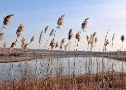 The Freshkills Park site.