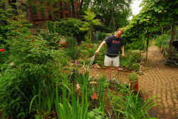 A Clinton Community Garden member waters plants.
