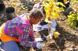 Tree Planting at Van Cortlandt Park;