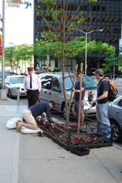 The Alliance for Downtown New York recruited volunteers from Lower Manhattan recently to work together to beautify Water Street by planting flowers in tree beds. This spot, in front of 1 New York Plaza, is one of the 24 beds that were spruced up to enlive