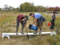 Salt Marsh at Udall's Cove, Queens, on Long Island Sound: Victoria O'Neill, Ellen Pehek and Susan Stanley of NRG helping to install a long term monitoring station to assess the vulnerability of the marsh to future sea level rise.