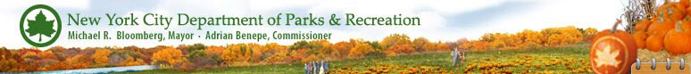 New York City Department of Parks & Recreation