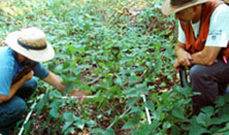 Two researchers bend over a marked off section of ground covered in plant life. One researcher is pointing at the ground as the other looks on.