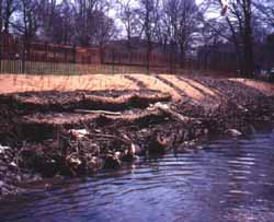 Photograph of a streambank along the Bronx River, link to enlarged image