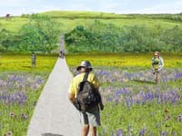 Meadow flowering rendering