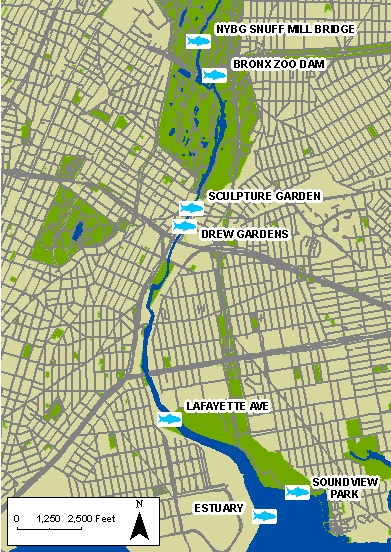 Lehman College Fish Sampling Location Map