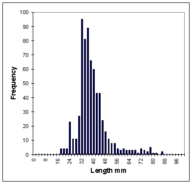 Mummichog 2001-2002 Length Frequency Analysis