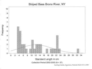 Striped bass length frequency analysis