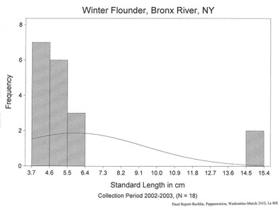 Winter flounder length frequency analysis