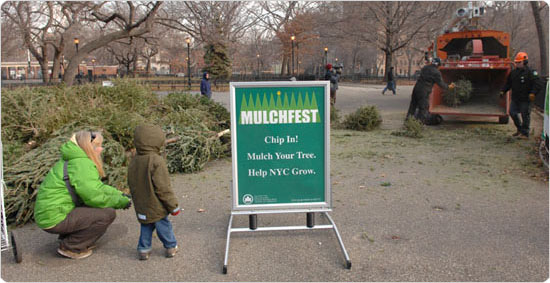 A child watches as a pile of Christmas trees is gradually chopped into mulch. Tompkins Square Park, Manhattan, January 5, 2008. Photo by Daniel Avila.