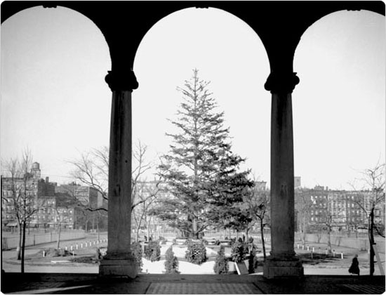 The Thomas Jefferson Park Christmas tree viewed through pavilion arches, December 1934. Courtesy of Parks Photo Archive; Neg. 4677.