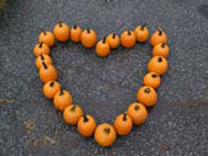 Pumkins arranged in the shape of a heart