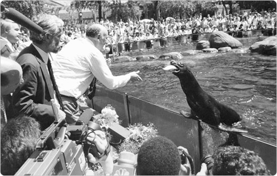 Mayor Ed Koch feeds a sea lion at the reopening of the Central Park Zoo, August 8, 1988. Photo, courtesy of the Parks Photo archive, by Simon Benepe.