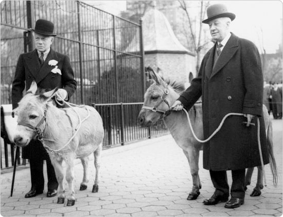 Former Governor Al Smith, a big fan of zoos, being presented with two donkeys at the Central Park Zoo, March 7, 1940. Smith presided over the opening on the Staten Island Zoo on June 10, 1936. Courtesy of the Parks Photo Archive, Neg. 18312.