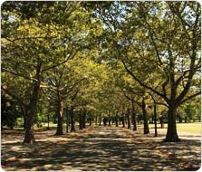 A tree-lined lane in Flushing Meadows Corona Park