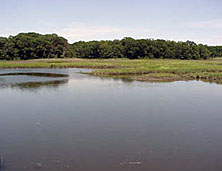 image of salt marsh