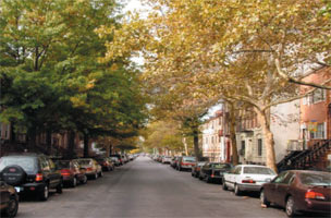 Image of a Tree lined street in Morrisania.