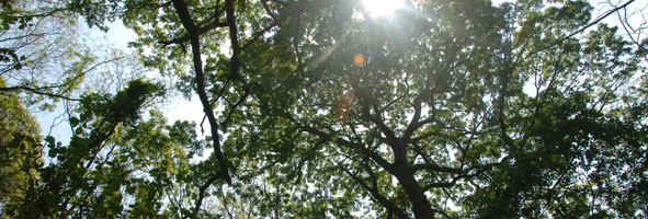 Sunlight streams through the leaves and branches of a tree