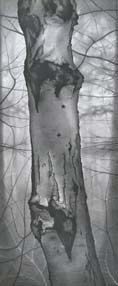 Urban Woodlands: Drawings by Mary Reilly