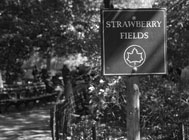 Image of Strawberry Fields Forever
