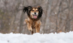 Small Dog bounding through the snow