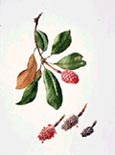 "Photo of a watercolor from ""Portraits of a Garden"", click for a larger version of the picture"