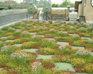 Parks' Five Borough Administrative Building green roofs.