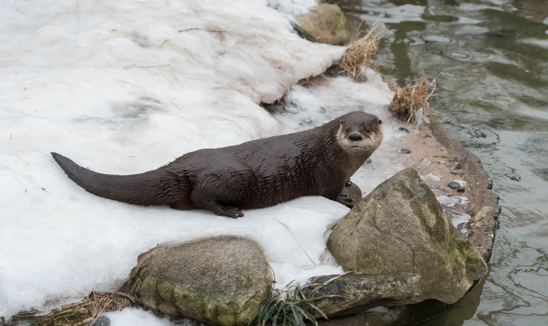 Cute Zoo Animals To See This Winter Nyc Parks