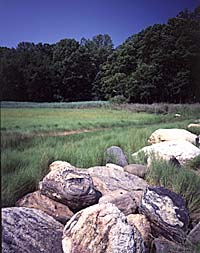 Landscape photograph of open land, rocks, and trees in the distant