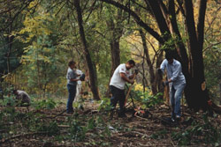 Photograph of a forest restoration team working in Northern Manhattan Parks