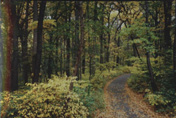 Photograph of woodland area in Northern Manhattan Parks forest