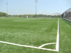Multipurpose Field at College Point Fields