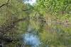 Enjoy a multimedia exploration of the Bronx River that includes 360-degree panoramic imagery and streaming video interviews.