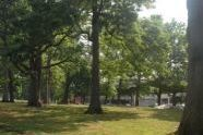 The Park in Summer