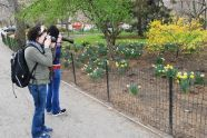 Visitors documenting the flowers, Central Park West Drive