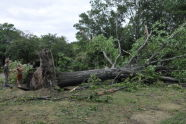 September 2010 Storm Damage