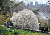 Spring at Fort Tryon Park