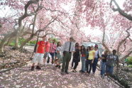 Cherry Trees and the Urban Park Rangers