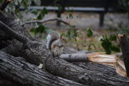 A Squirrel Surveys the Damage