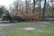 Downed Trees at Pelham Bay Park