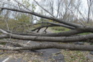 Downed Trees at Soundview Park