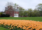 Tulips at Fort Totten