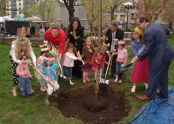 Children from St. Vartan Play Group help plant a cherry tree