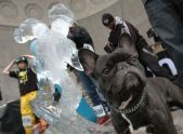 A dog poses with an ice sculpture