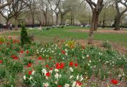 Flowers in Tompkins Square Park
