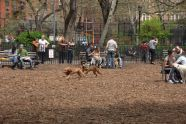 Tompkins Square Park dog run