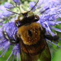 close–up picture of a bee on a flower