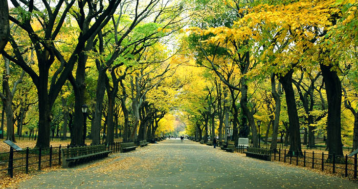 foliage header - Cosa fare in autunno a New York
