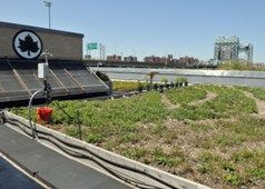 Green Roof at 5-Boro on Randall's Island.